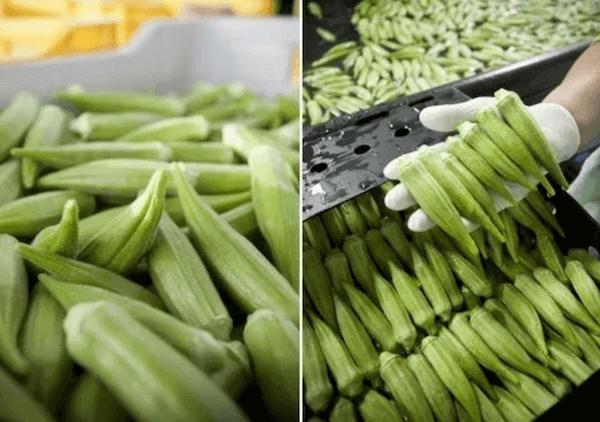 recetas de okra para la diabetes